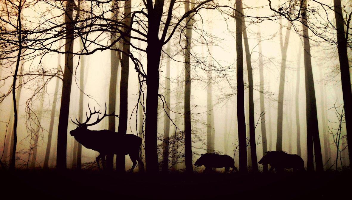 Hirsch und Wildschwein