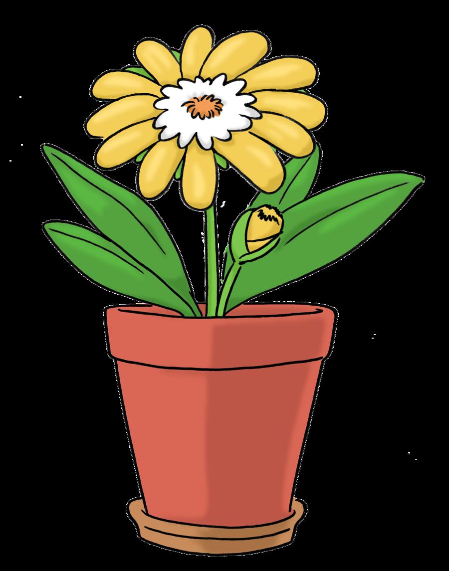 Bild zeigt eine gelbe Pflanze