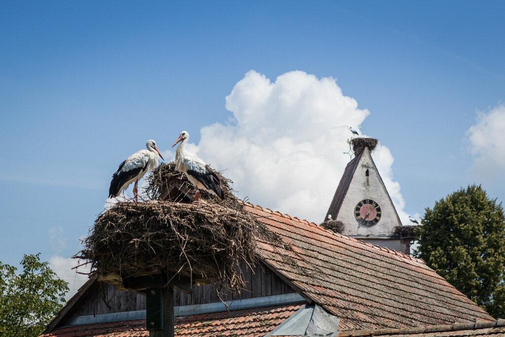 Kirche mit Störchen