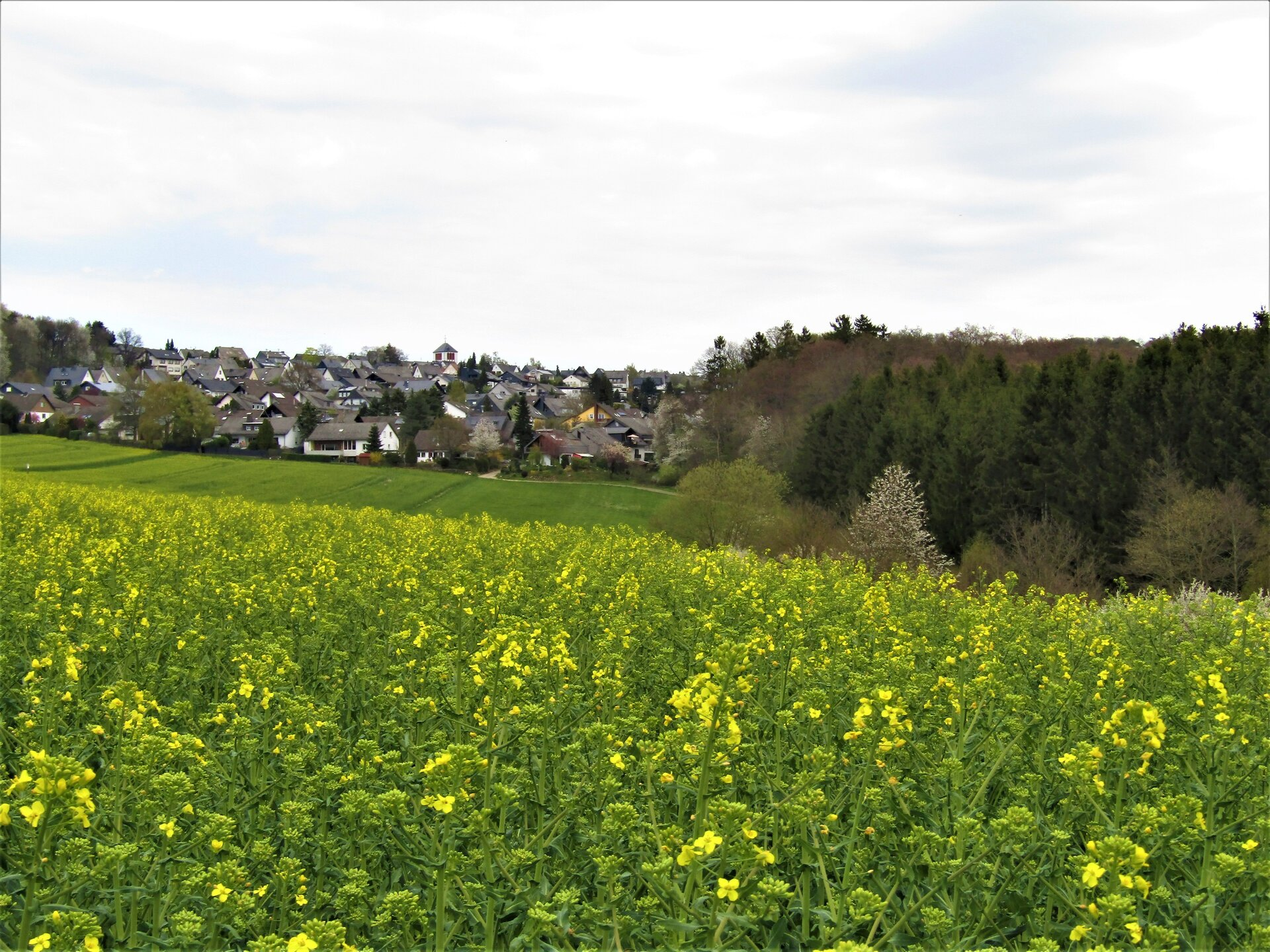 2020-07_Blick_Traumschleife_oberesBaybachtal