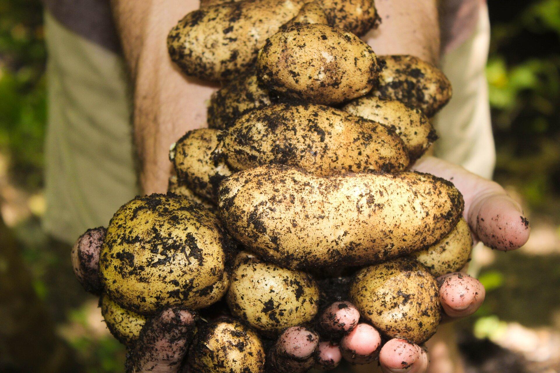 www.lebe-einfach-ev.de.kartoffeln