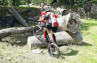 Rad über Baumstamm