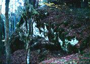 Der Hohle Fels südöstlich von Bitz (hinter dem Schützenhaus)