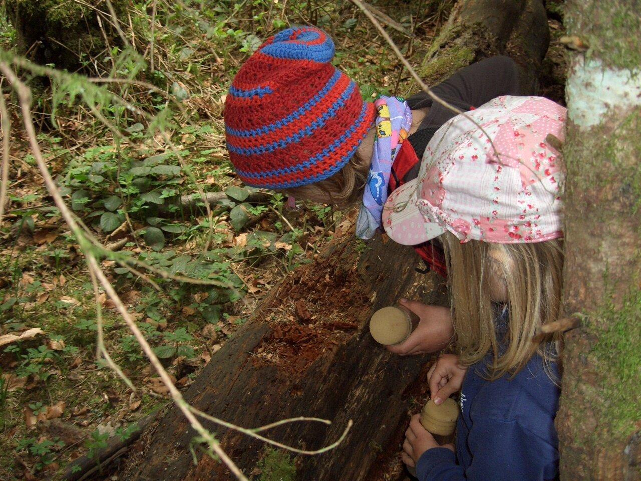Eindruck über die Waldgruppe