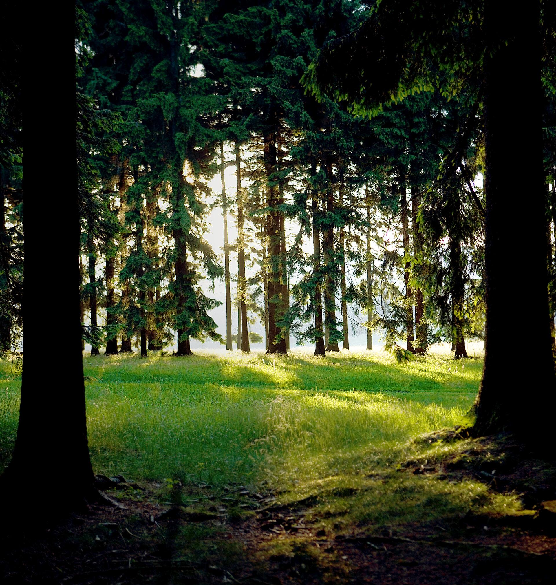 Wald bei Heubach
