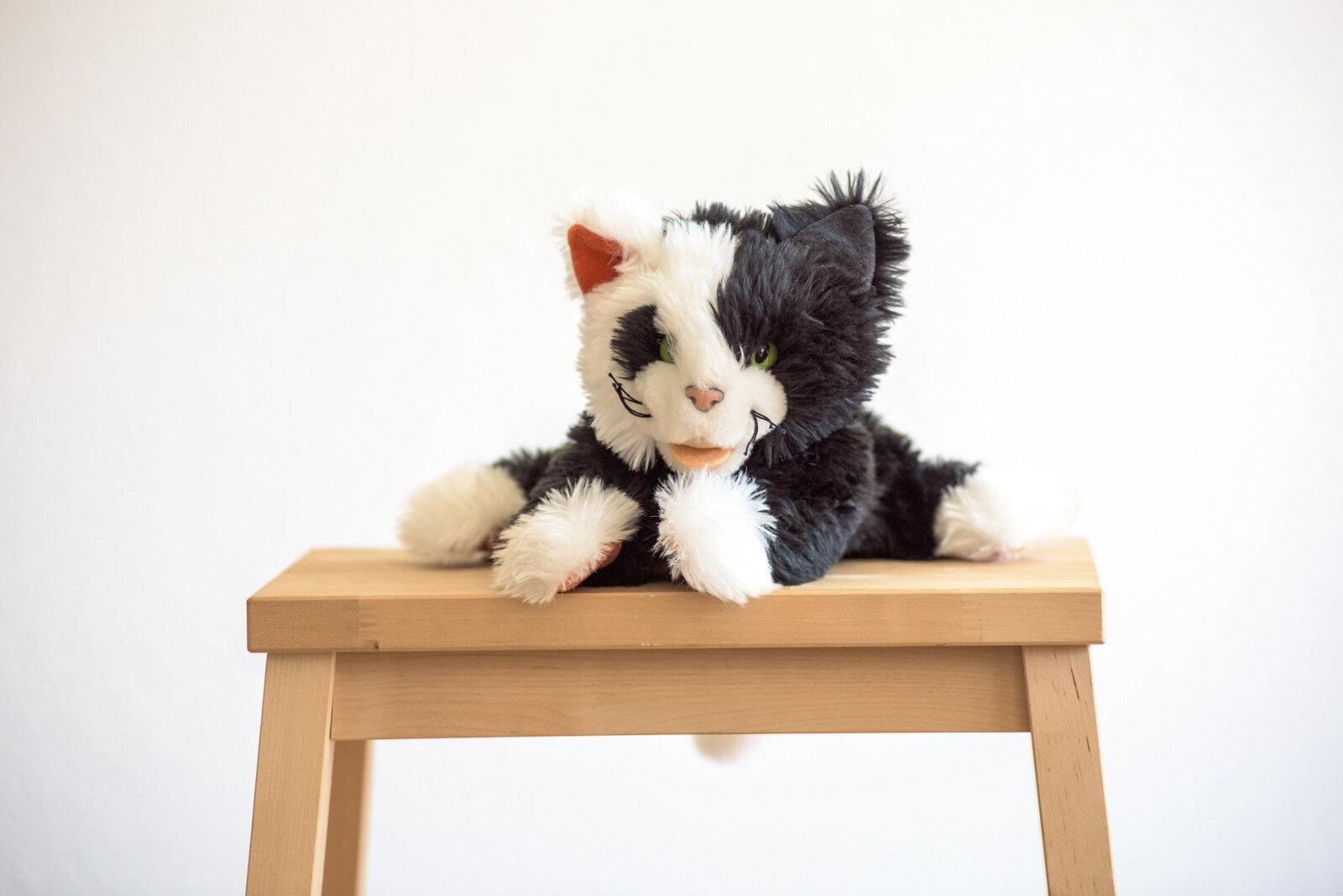 Altenaffeln- Tinto Katze