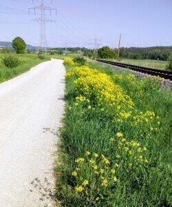 Radweg Fo-Pinzberg