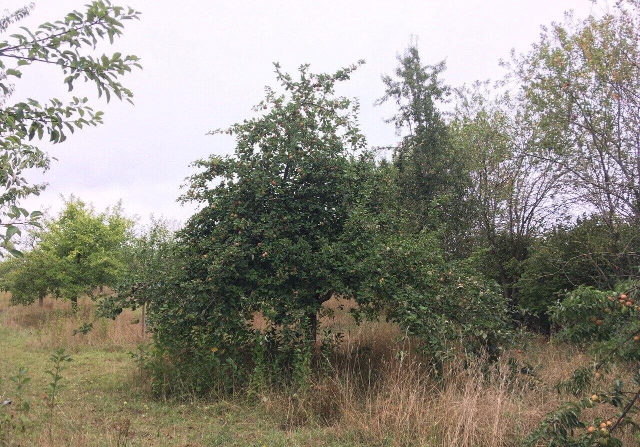 Baum_74
