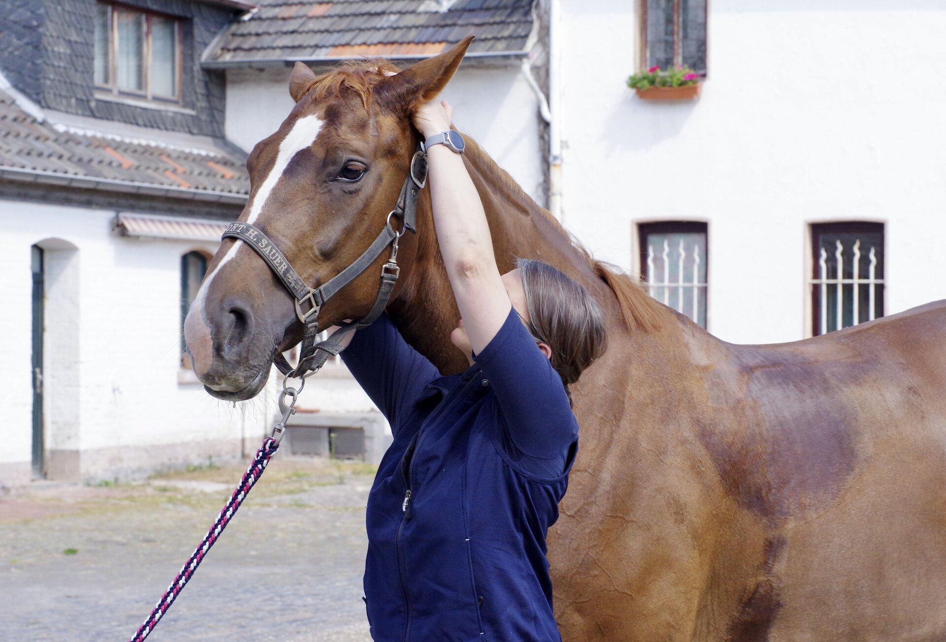 Pferd_therapie_cut