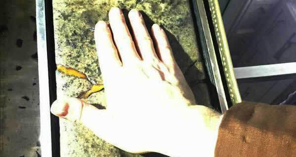 Hand auf Stein