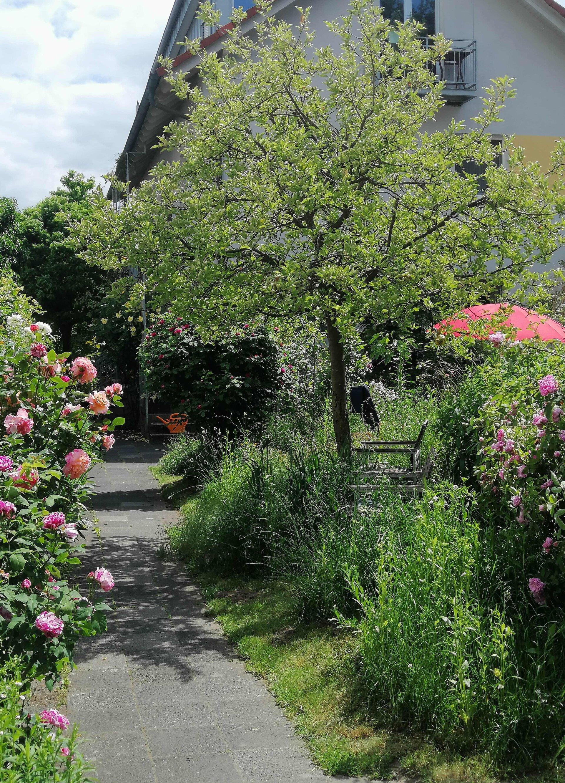 Vorgarten aus Bischofsheim
