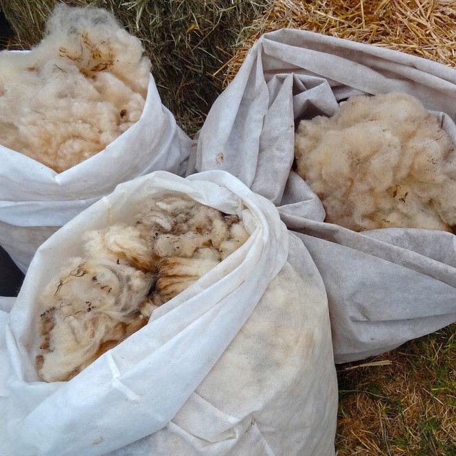 Preis 9 Schafwolle