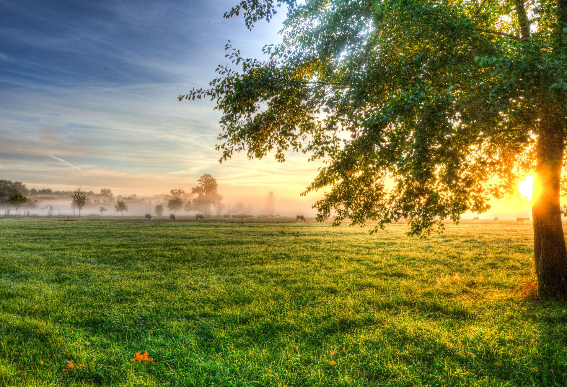 Spreewaldlandschaft, Foto: Peter Becker