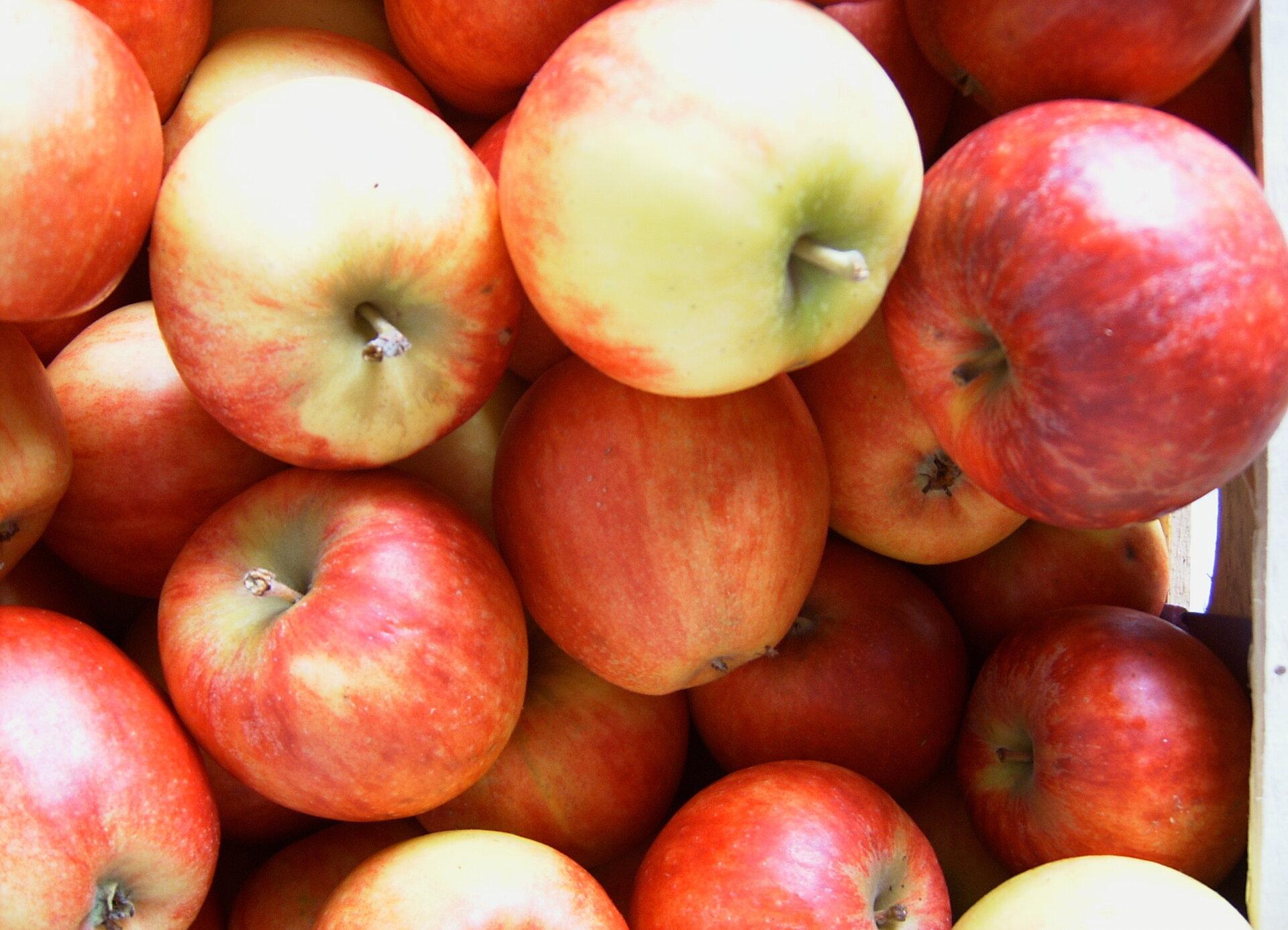 Äpfel Hofladen Wagner