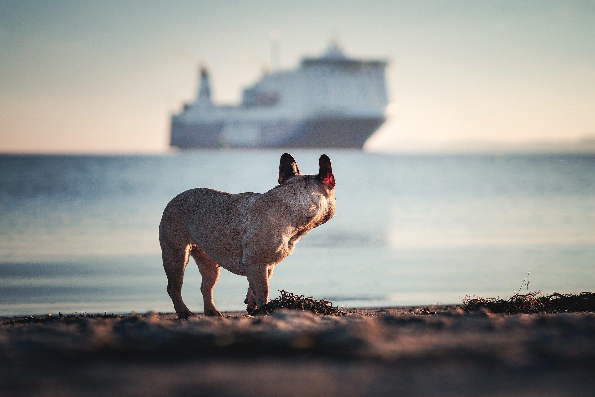 Colorlinehund