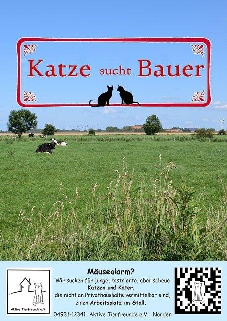 Katze sucht Bauer