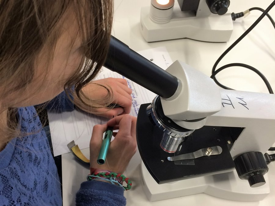Mikroskopieren_2