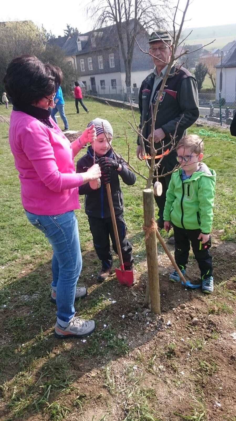 Baum binden