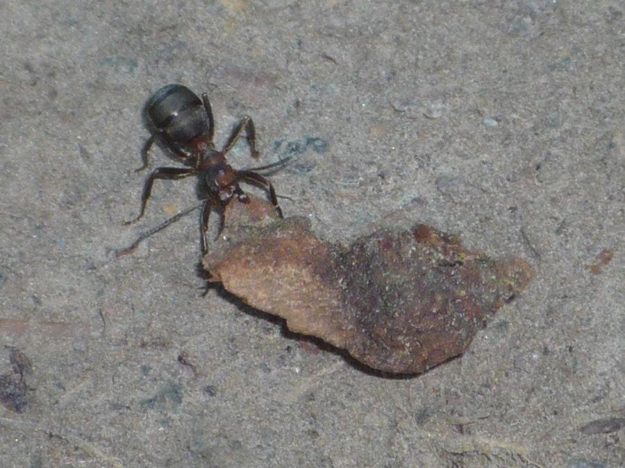 Ameisen-Waldwanderung