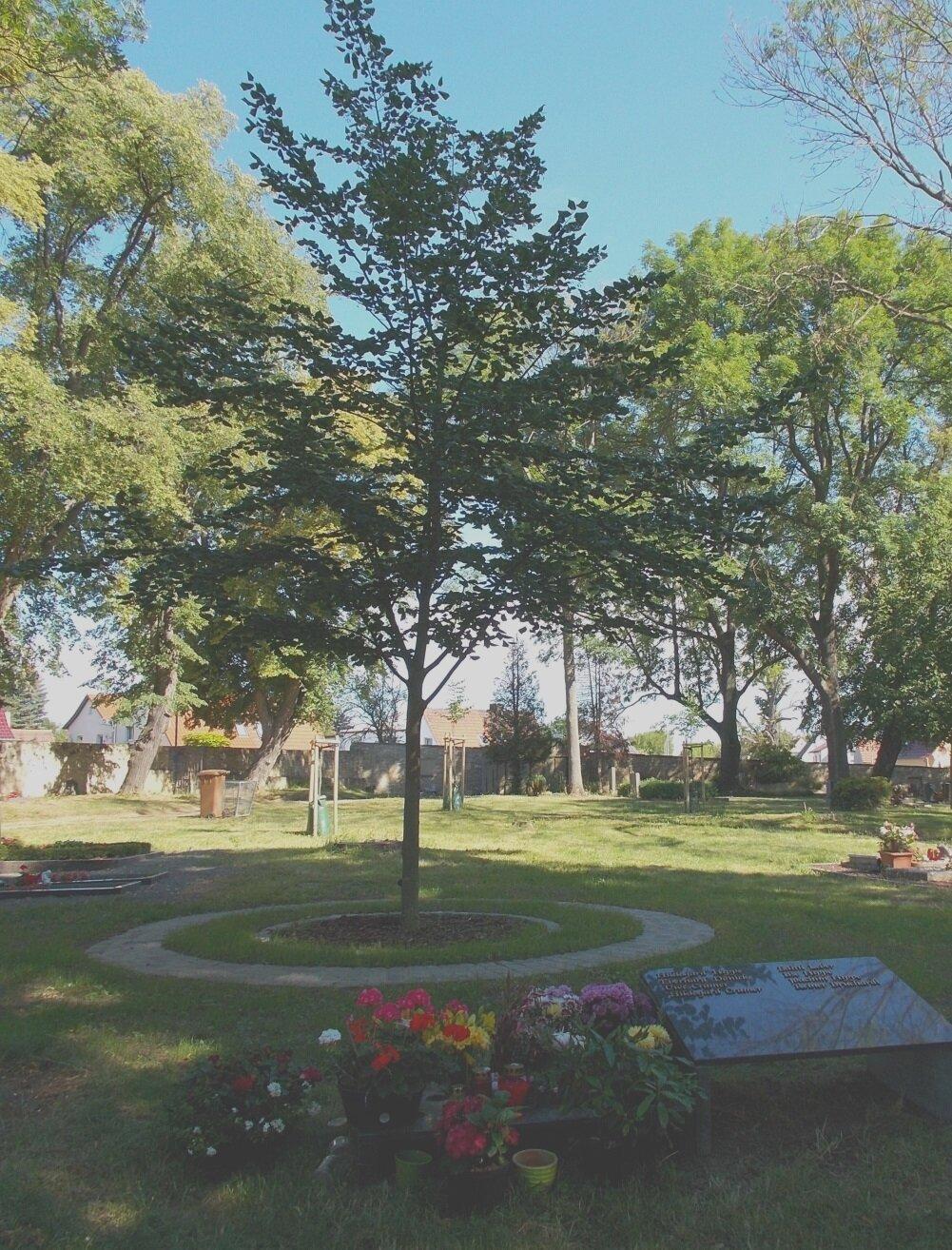 Anlage Baumbestattung auf dem Friedhof Querfurt