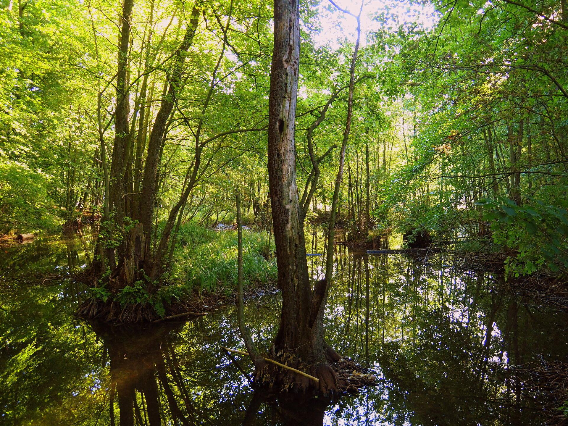 Naturpark Schlaubetal Foto: Herr Salesch