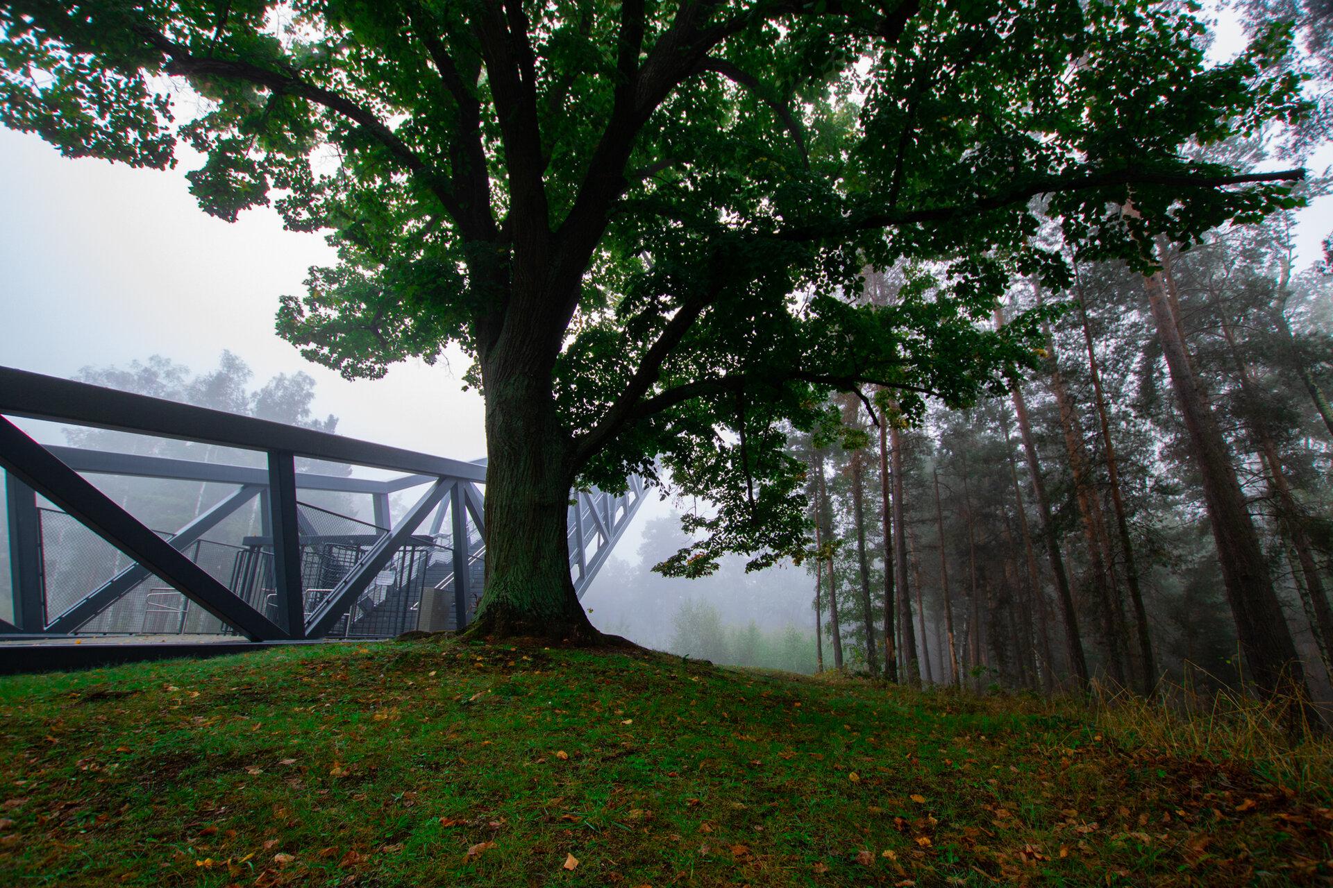 Treppe nebel