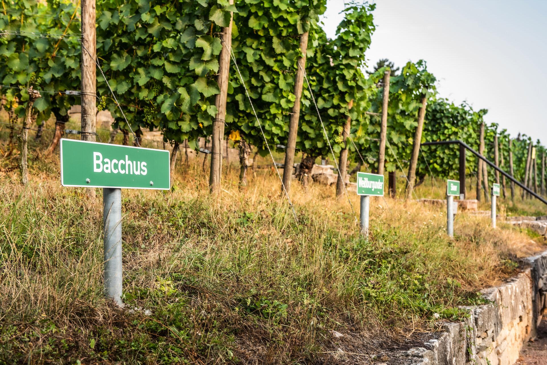 Schau-Weingarten