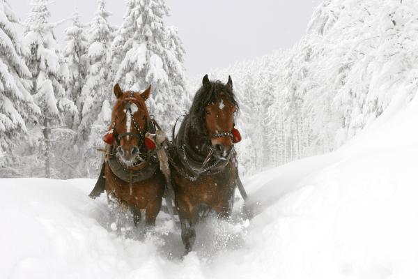 Pferdeschlitten Freyung
