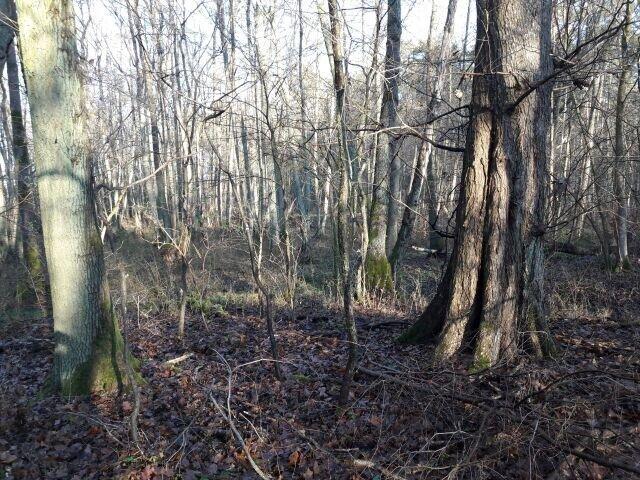 Waldgebiet Eggersdorf Süd an der Umgehungsstraße
