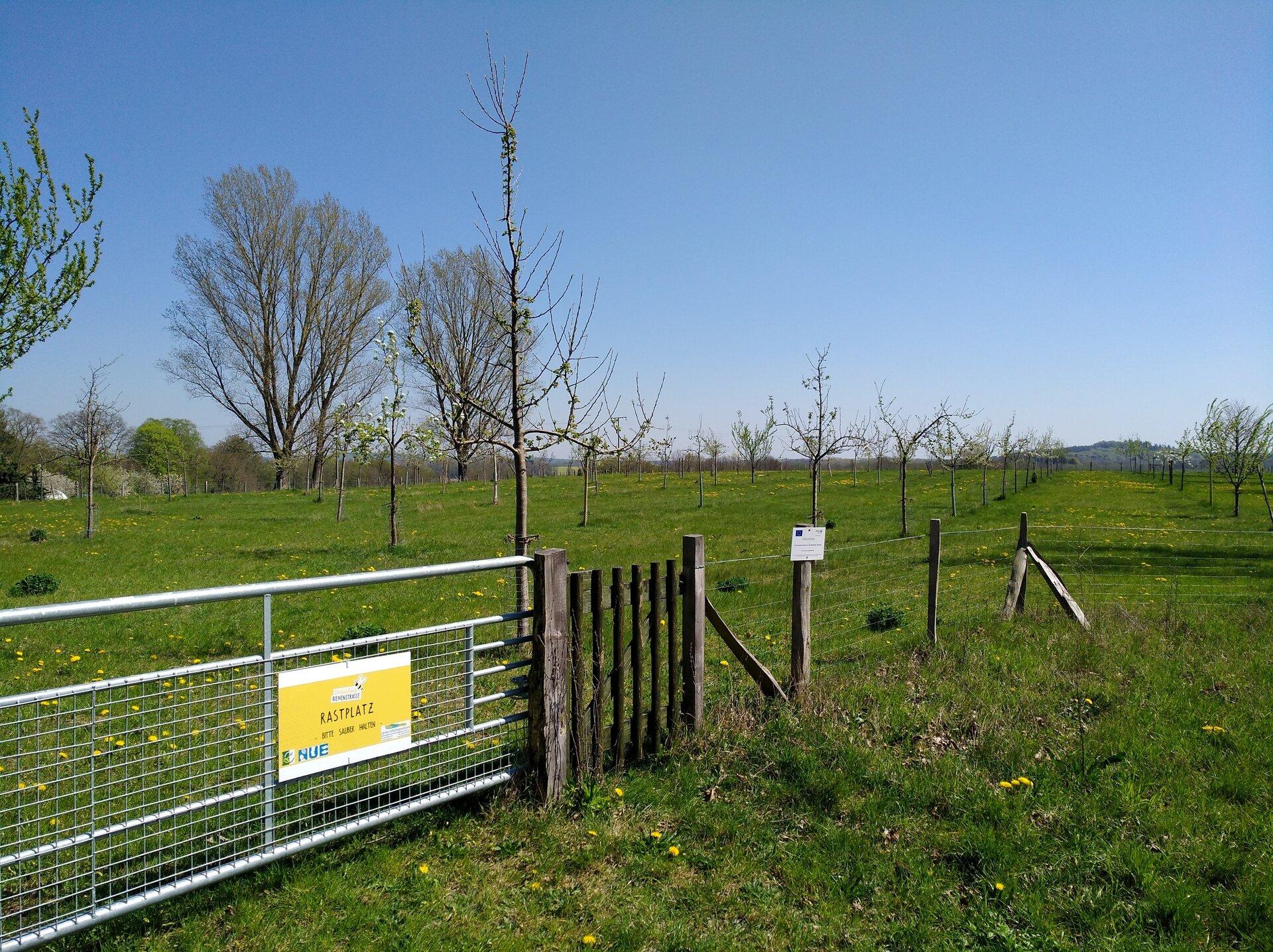 Anlage einer Streuobstwiese in Rothen 2017