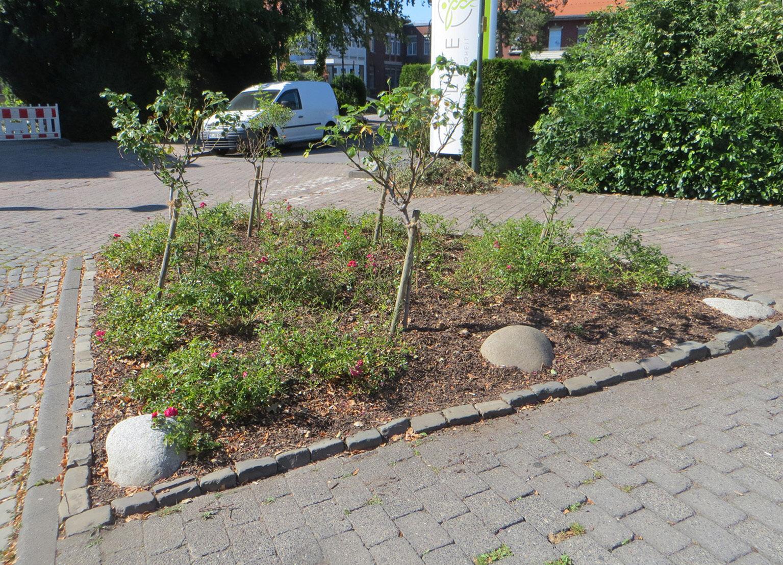 Rosenbeet am Dr.-Hans-Böckler-Platz