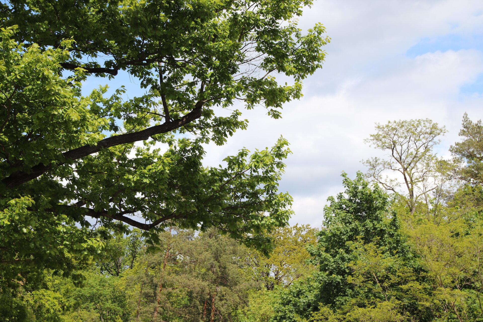Baumgruppe in Falkensee