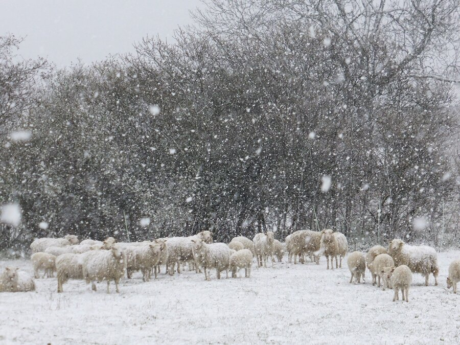 Schnee zum Winterschluss 2020