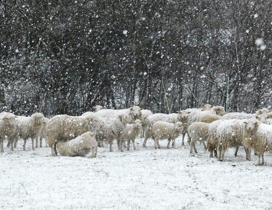 Skudden im Schnee 2020