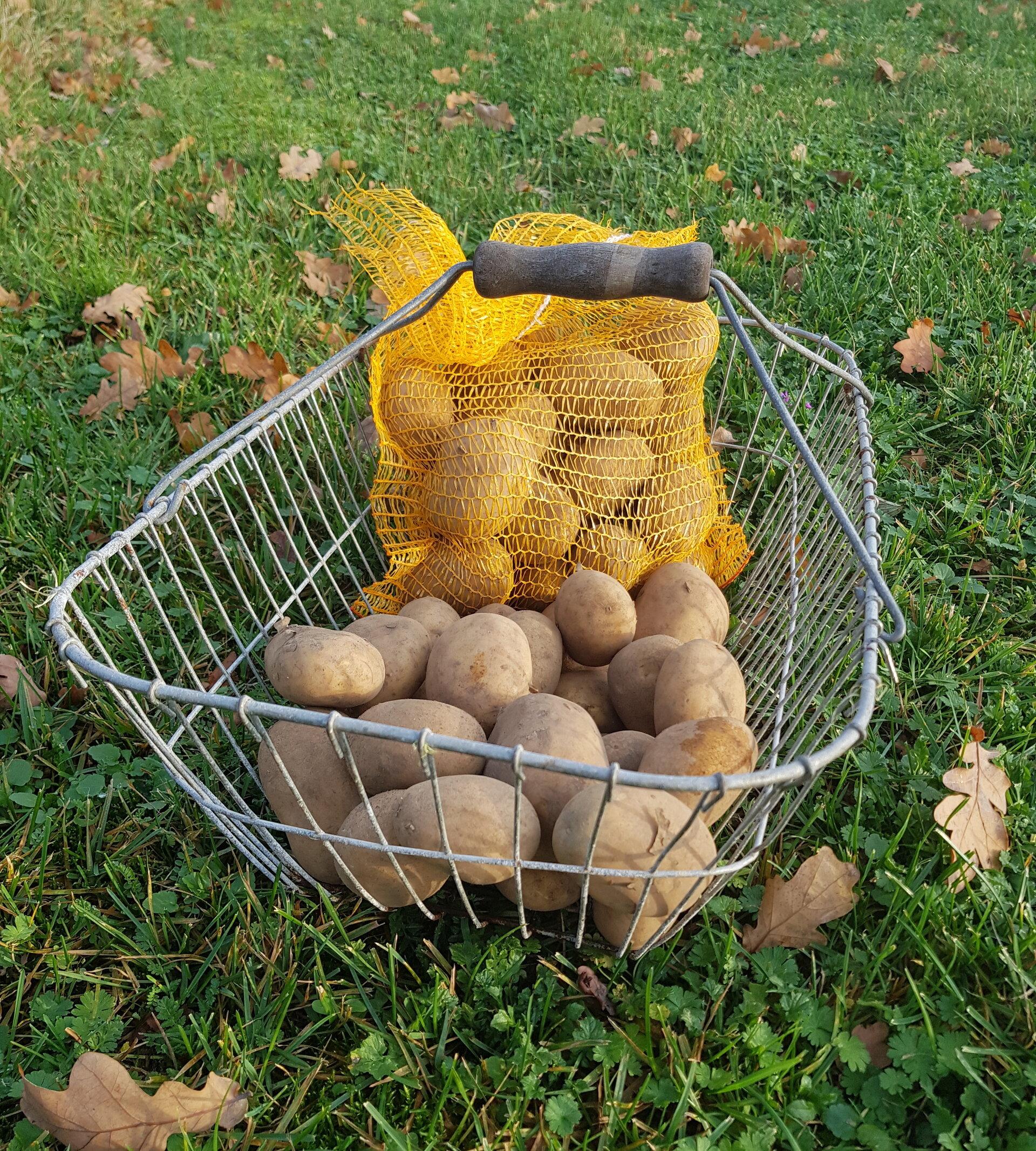 Heide Kartoffeln (Belana)