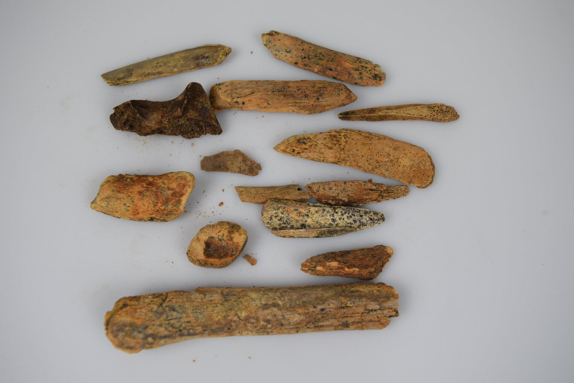 Tierknochen Foto: Wegemuseum