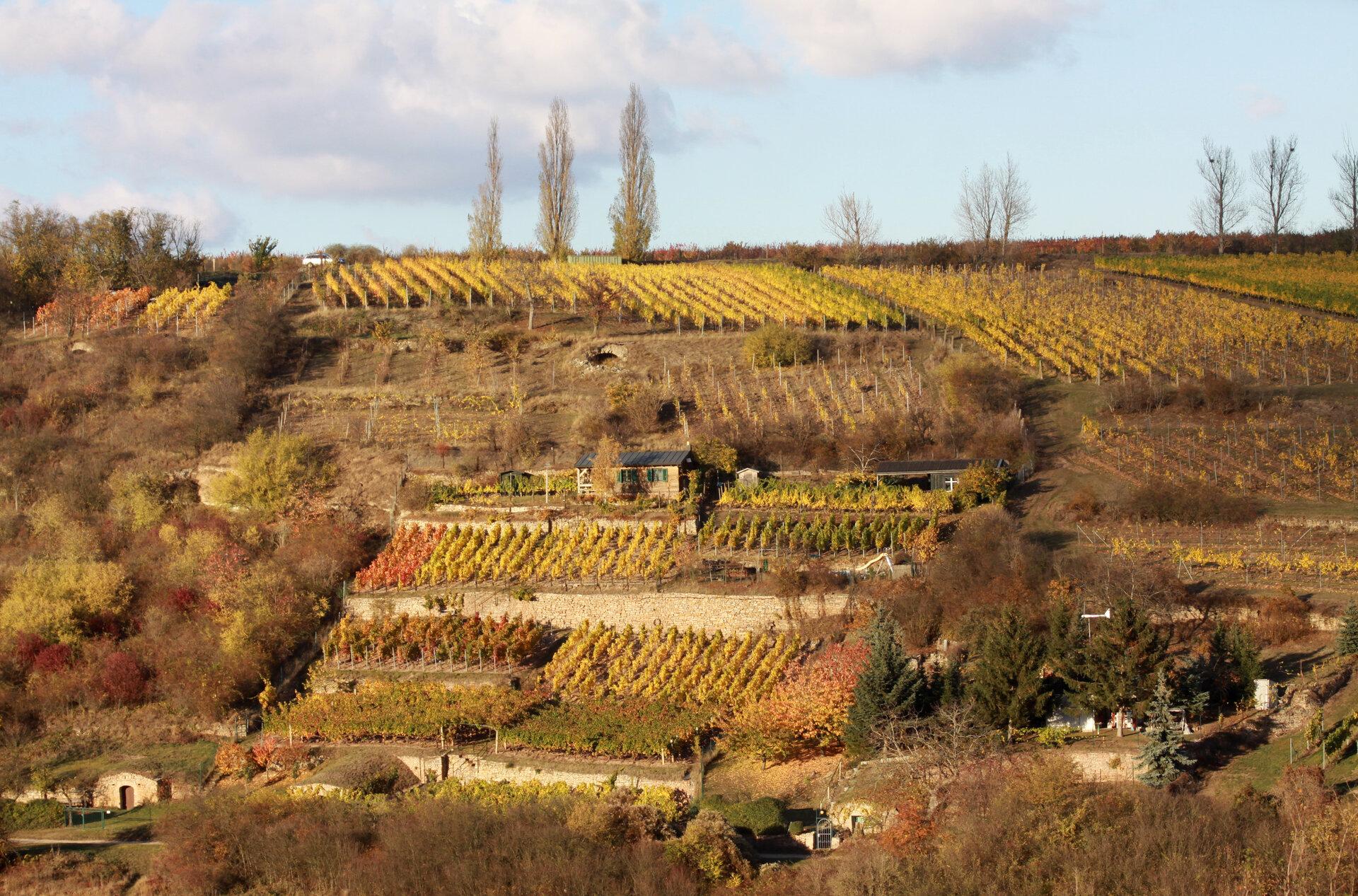 Höhnstedt im Herbst (Foto: Weinbauverband Saale-Unstrut)