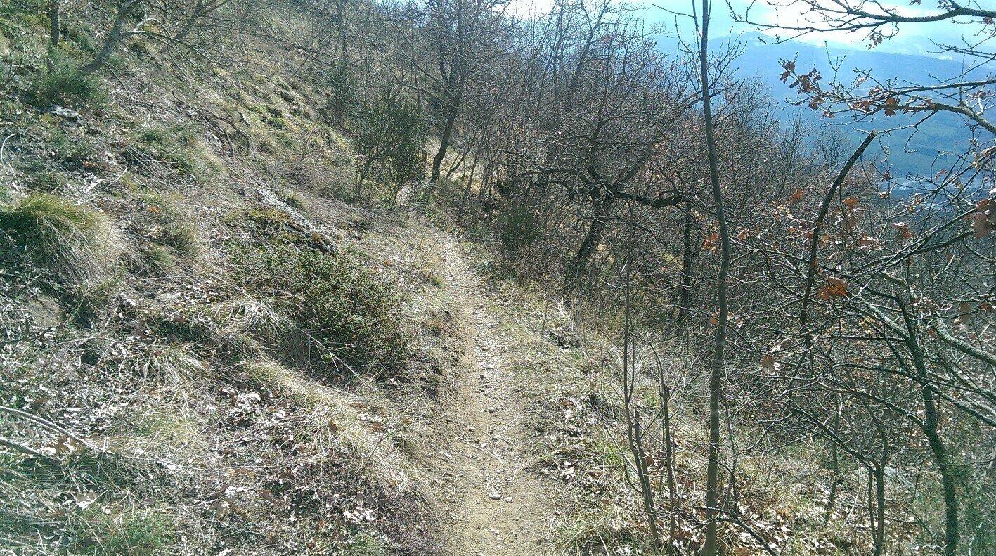 Trail 2015