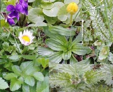 Frühlingsrätsel