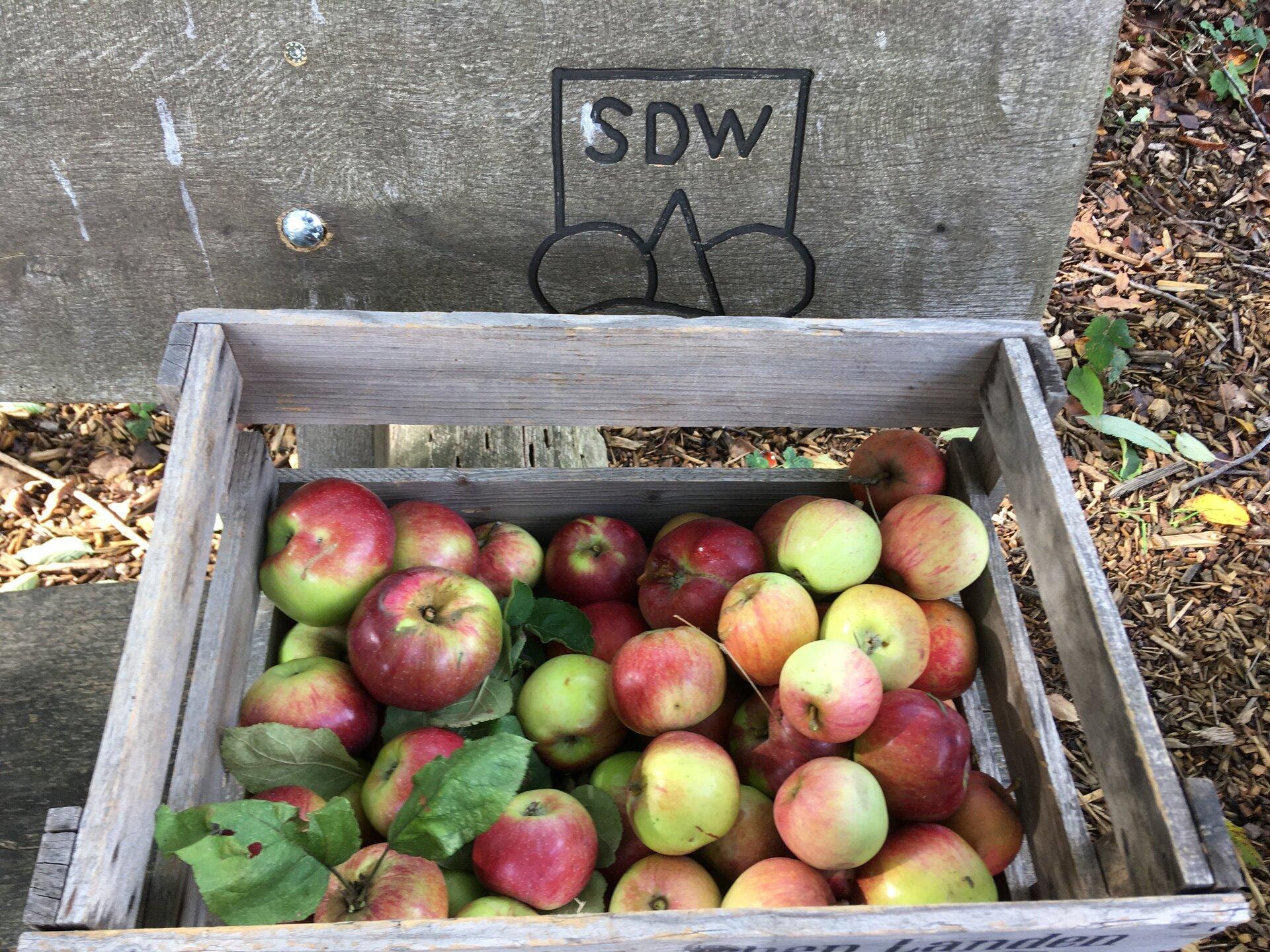 Äpfel in der Holzkiste