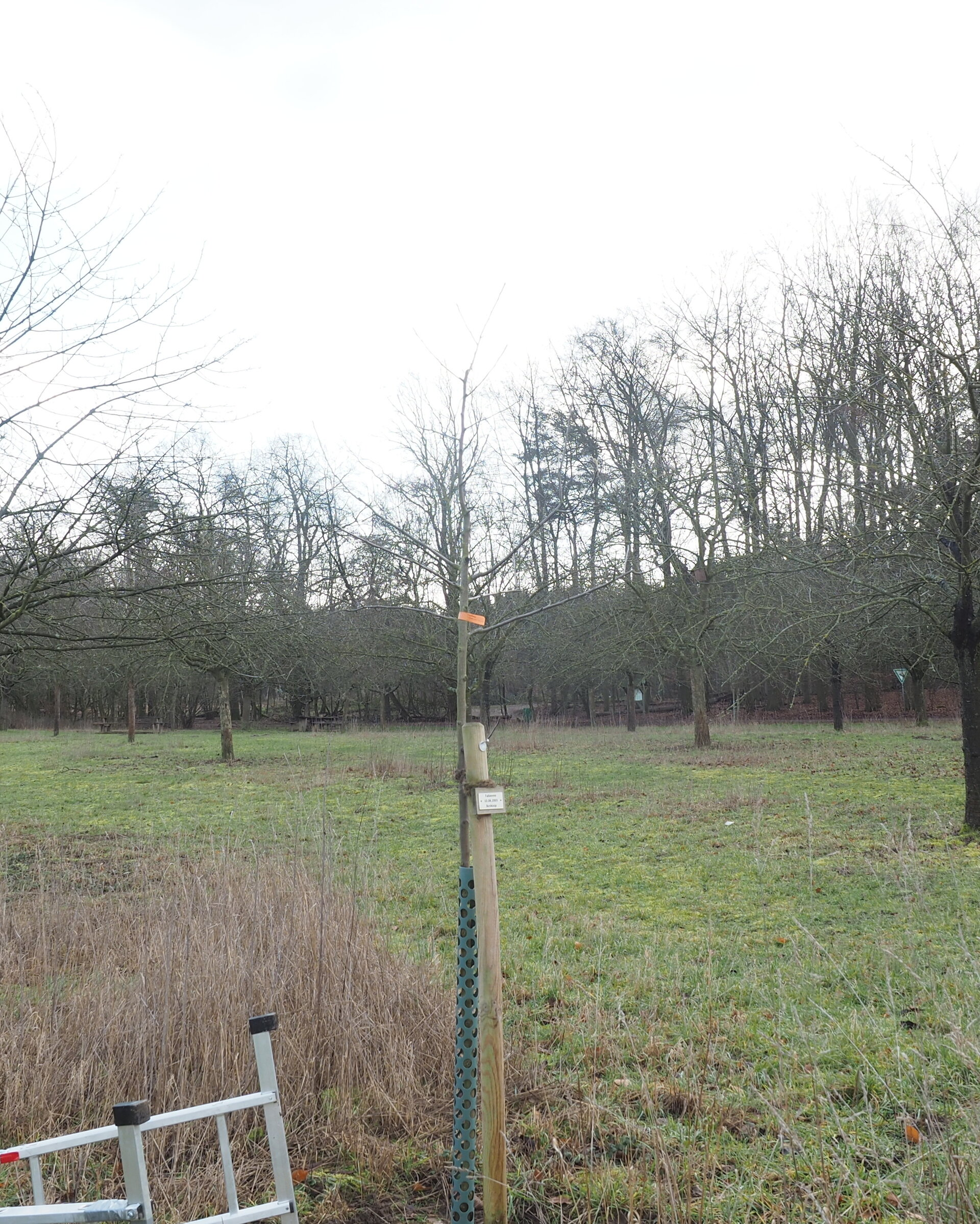 Baum 62