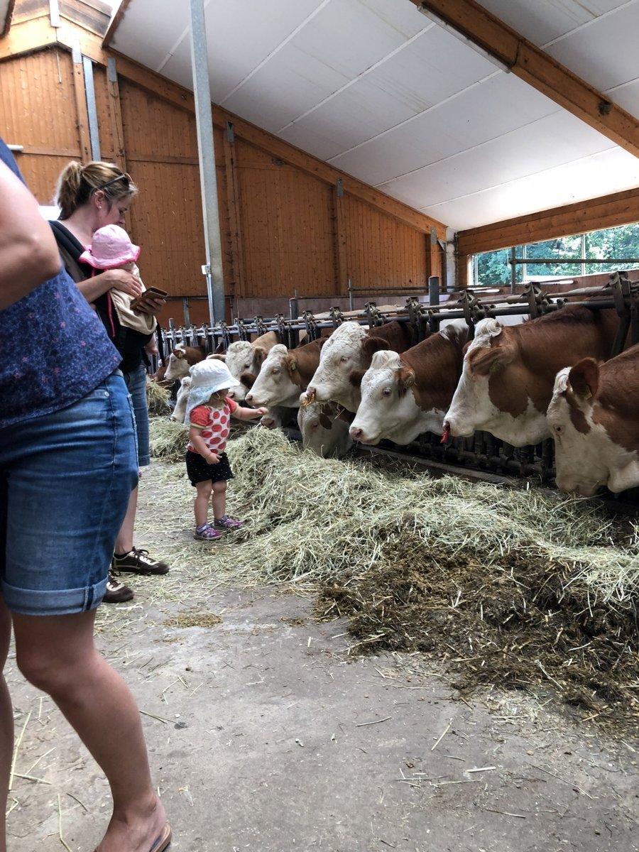 Bauernhofbesuch Kühe