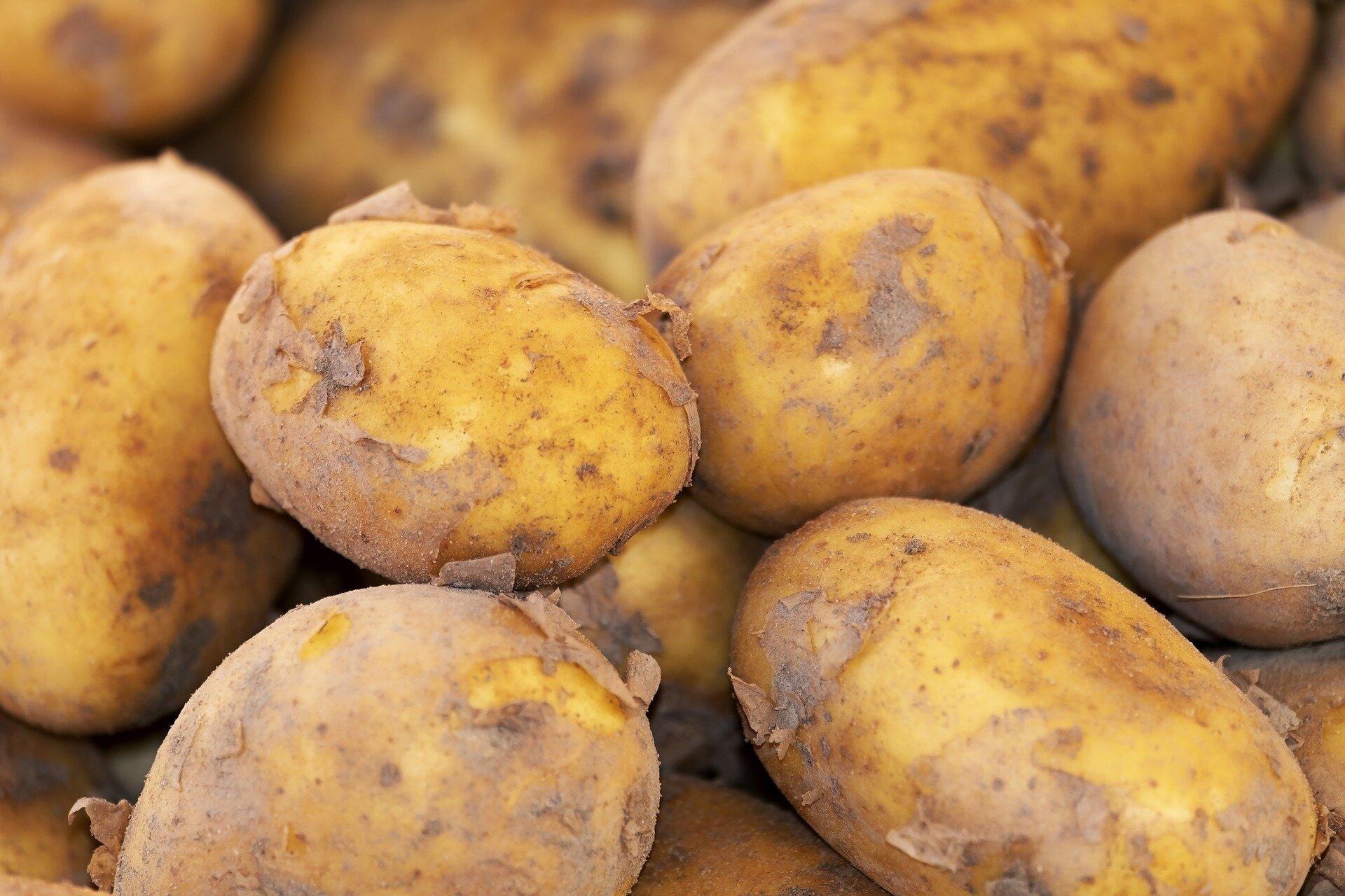 Kartoffelnotierung