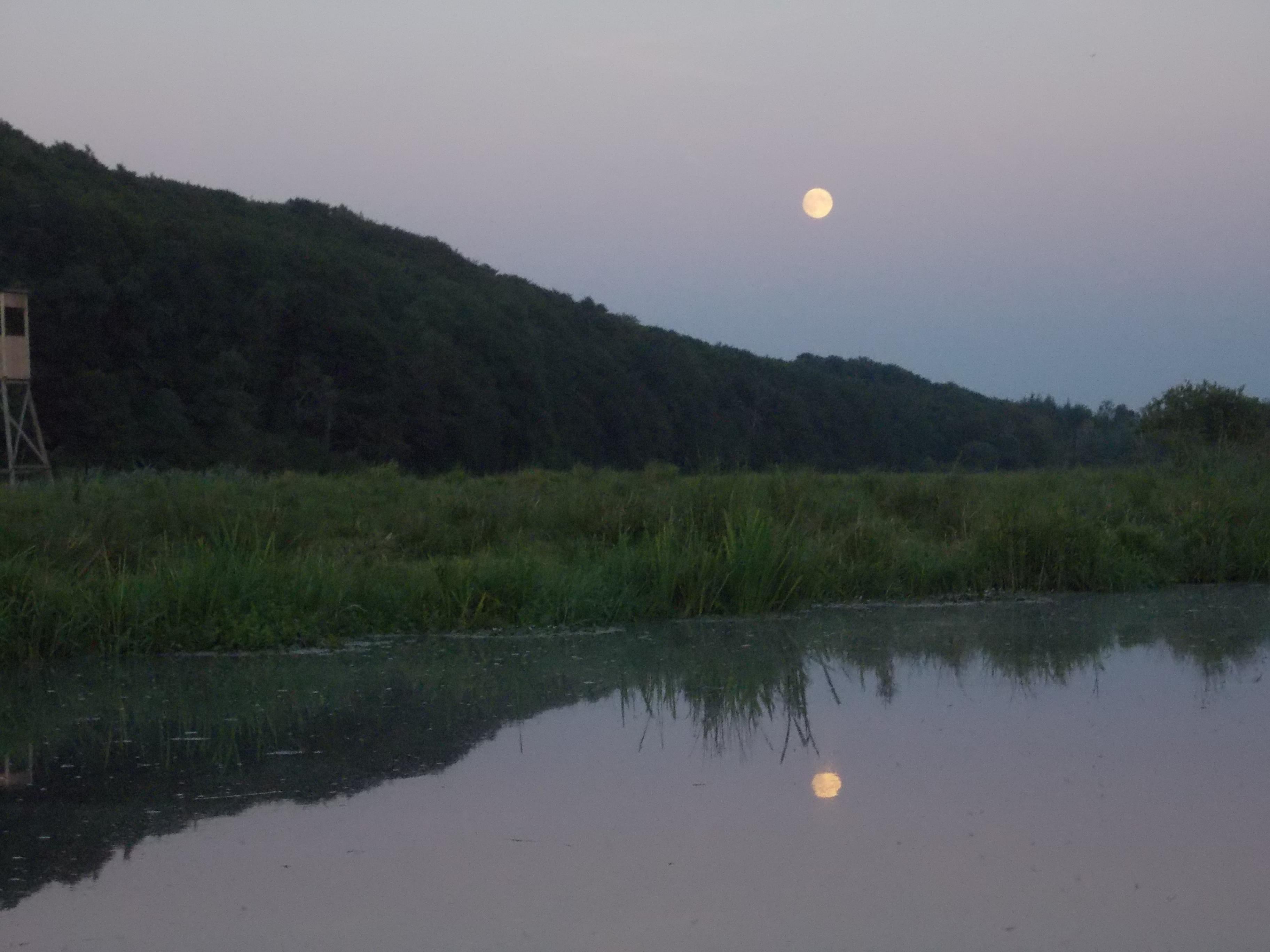 Vollmon in der Sommernacht  im Recknitztal