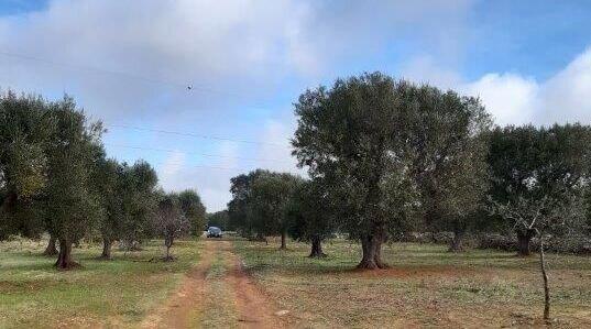 Grundstück Giuseppe Vigilanza