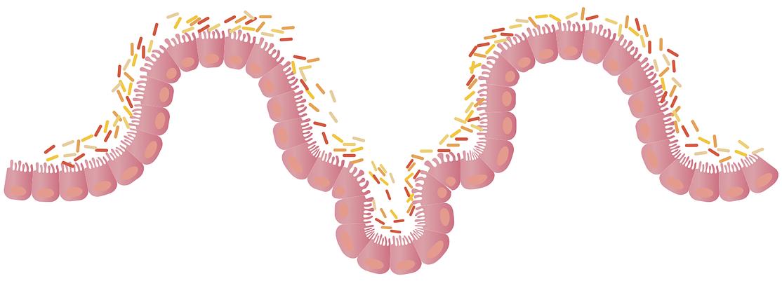 Mikrobiom Darm