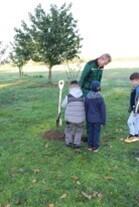 Baumpflanzung Bild 2