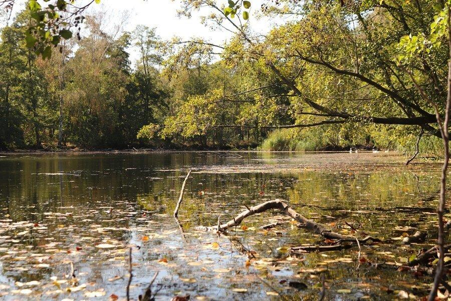 Lehmgruben Wellaune - Teil des FFH-Gebietes (Philipp Zimmer © Alle Rechte vorbehalten)