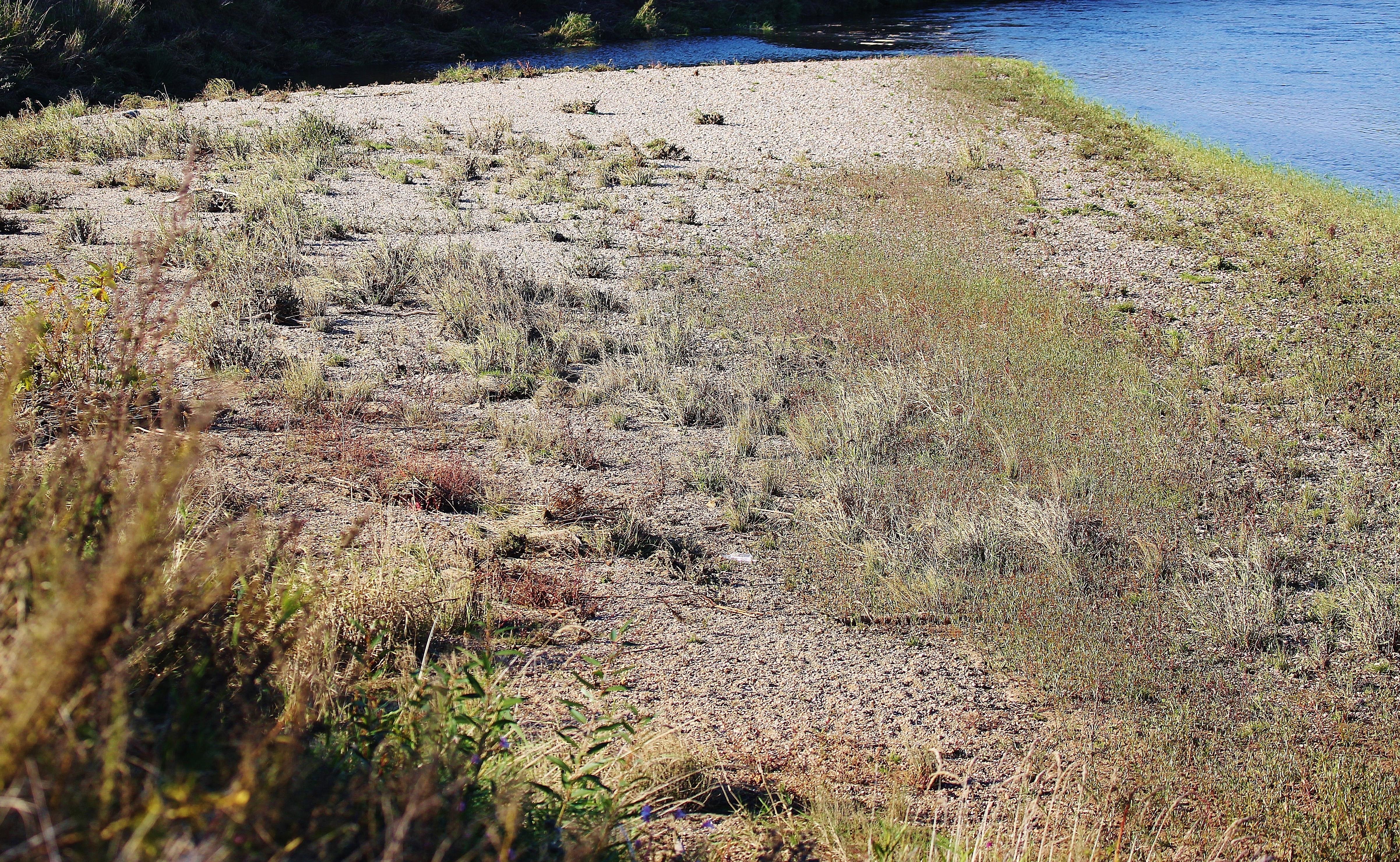 Landschaftsbild Muldenaue 2