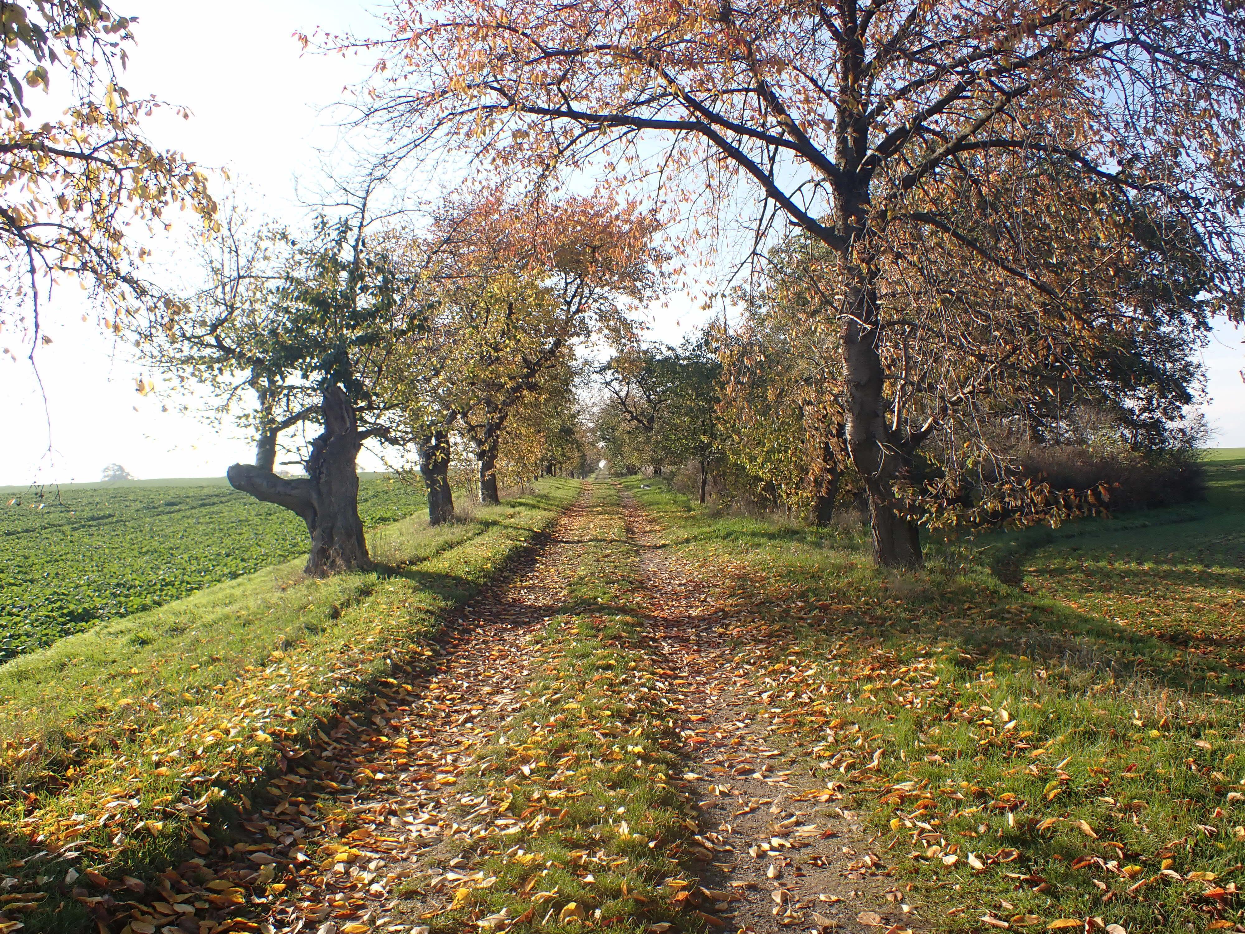 Obstalle Wedelwitz im Herbst